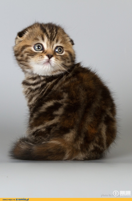 Вернуться на страницу продажа котят