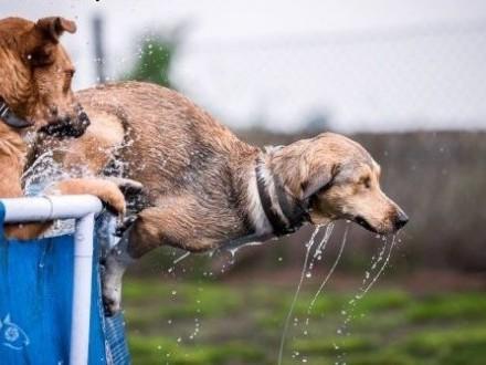 BAŚCIK  - popatrz w  psie oczko cudne, bez niego życie jest nudne:),  dolnośląskie Wrocław