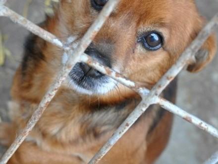 ERGOSEK-malutki psiak po przejściach-szukamy cierpliwego  troskliwego opiekuna-adopcja