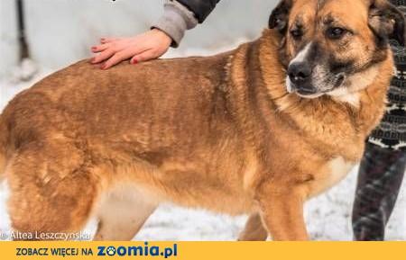 STELLA - spokojna, kochana sunia już tak długo czeka.... adoptuj!,  mazowieckie Warszawa
