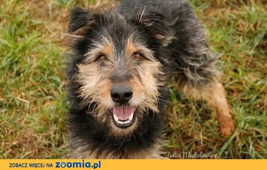 PILNE!!Radosny, kudłaty pies Gucio czeka na Ciebie!,  Kundelki cała Polska