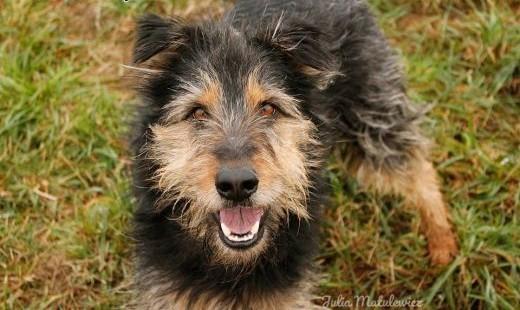 PILNE!!Radosny  kudłaty pies Gucio czeka na Ciebie!   Kundelki cała Polska