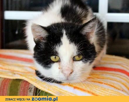 Staś - kot nerkowy