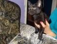 Przeuroczy mały kotek poszukuje dobrego domu_