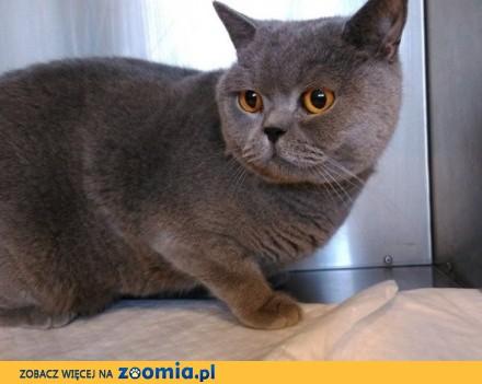Kot Antoś szuka domu
