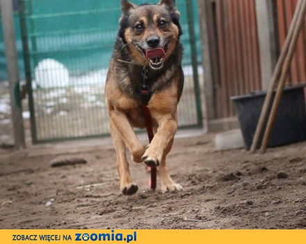 Waldi - uśmiechnięty pies czeka na dom