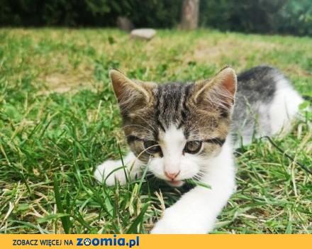 Małe kociaki szukają domów