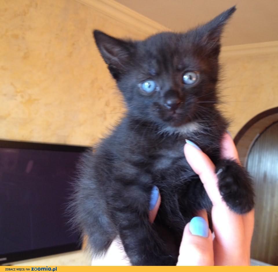 Oddam 2 Czarne Kotki- kotka i kot