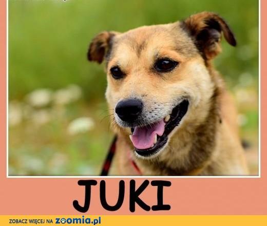 Mały 10 kg, przyjacielski, radosny,energiczny piesek JUKI.Adopcja ,  dolnośląskie Wrocław