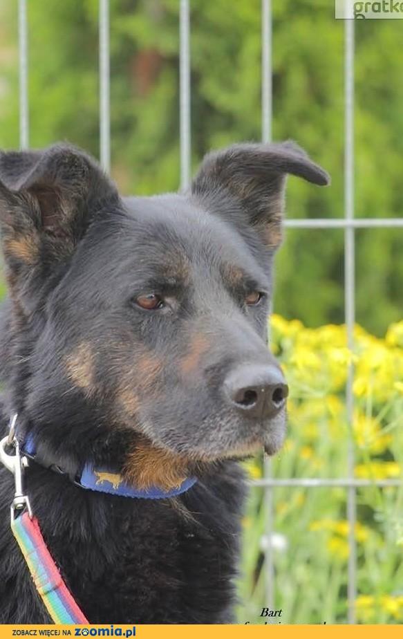 Bart- smutny, spokojny pies- podaruj mu dom i lepsze życie!