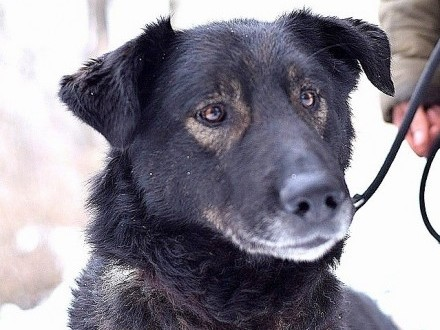 4 lata  35 kg łagodny zrównoważony pies WIESIEK_Adopcja