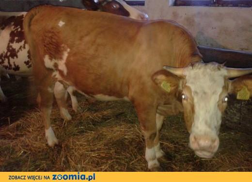 sprzedam krowę,  małopolskie Wieliczka