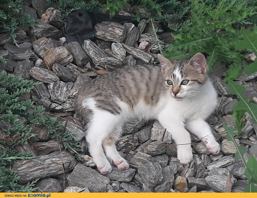 Koteczka Zosia szuka domu