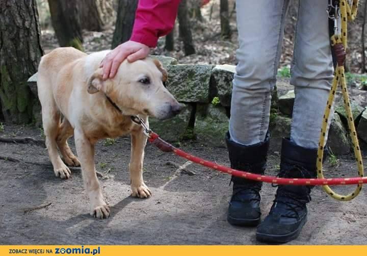 Aramis, poczciwy psi staruszek szuka domu!