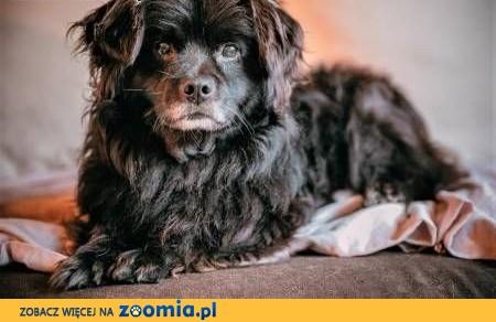 MISIO - nieduży, kanapowy przytulaczek szuka kochającego domu!,  małopolskie Kraków