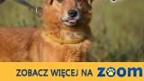 Luluś kocha ludzi i świat adoptuj go daj mu wspaniały domek,  Kundelki cała Polska