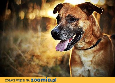 Borysek - młody psiak, kocha ludzi - kto odwzajemni jego miłość?