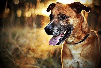 Borysek - młody psiak  kocha ludzi - kto odwzajemni jego miłość?