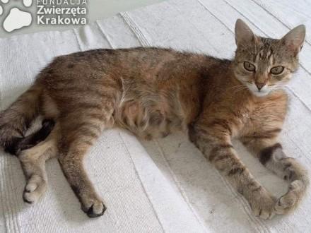 Sisi towarzyska  super kotka   małopolskie Kraków