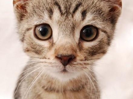 MAJTEK ;#8211; 4 miesięczny koci głodomór szuka kochających opiekunów!    wielkopolskie Poznań