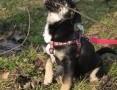 'KULKA cudowny rezolutny szczeniaczek szuka kochającego domku