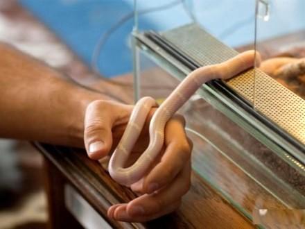 Sprzedam węża - okazja