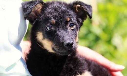 Cytrus - psie dziecko szuka domu   mazowieckie Nowy Dwór Mazowiecki