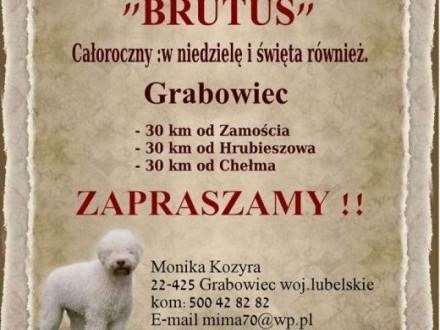 HOTEL dla psów i kotów BRUTUS   lubelskie Zamość