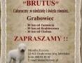 HOTEL dla psów i kotów BRUTUS,  lubelskie Zamość