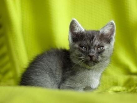 Grace z Fundacji Miasto Kotów   łódzkie Piotrków Trybunalski