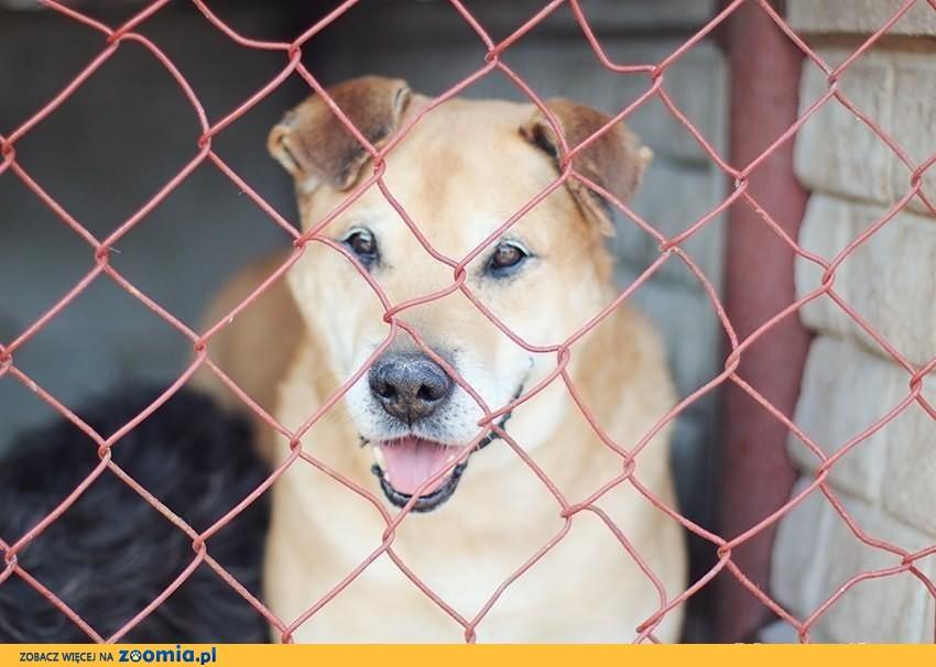 ALEX – psiak po przejściach szuka kochającego domu