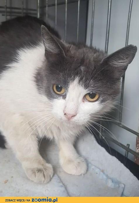 Piękna kotka Bella - pilnie szuka kochającego domu!