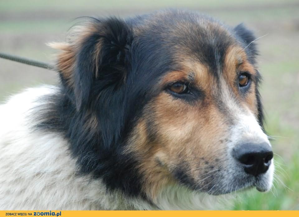 MISZA- ułożony ale smutny pies szuka domu