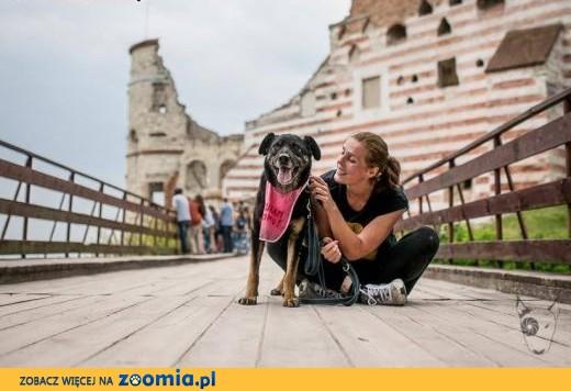 WŁODEK - gość na schwał! tylko dom mu daj!,  mazowieckie Warszawa