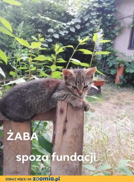 Koteczka Żaba szuka domu