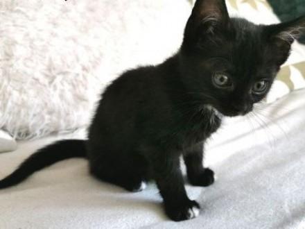 SISI ;#8211; przyjacielska 3 miesięczna kotka szuka nowego domu!   wielkopolskie Poznań