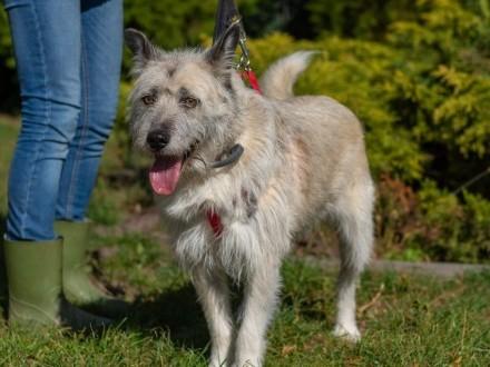 Iwan  przepiękny  dostojny domowy pies do adopcji!