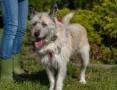 Iwan, przepiękny, dostojny domowy pies do adopcji!