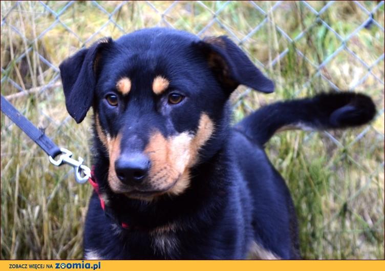 Merlin - będzie przyjacielem na dobre i na złe :)