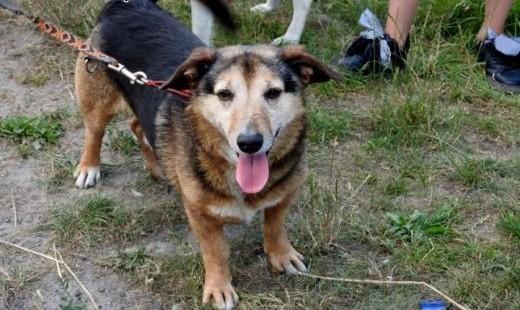 Cudak starszy psiak szuka domu   Kundelki cała Polska