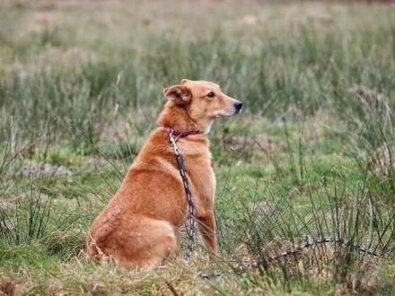 Gabi-smutna psinka za kratami - kto odmieni jej psi los?