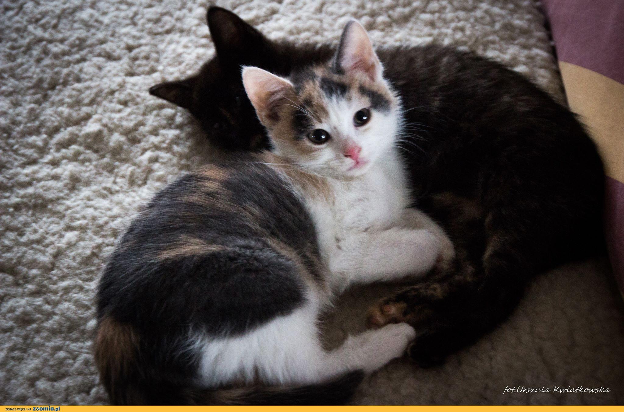 Malutkie koteczki i ich mamka, kocia rodzinka do pokochania!