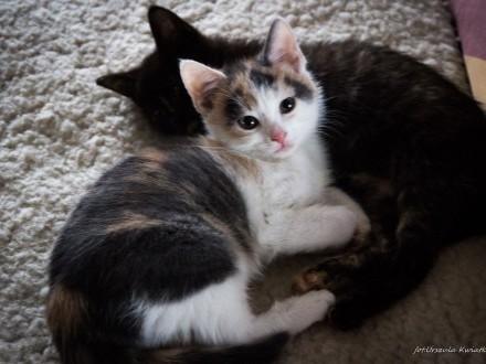 Malutkie koteczki i ich mamka  kocia rodzinka do pokochania!