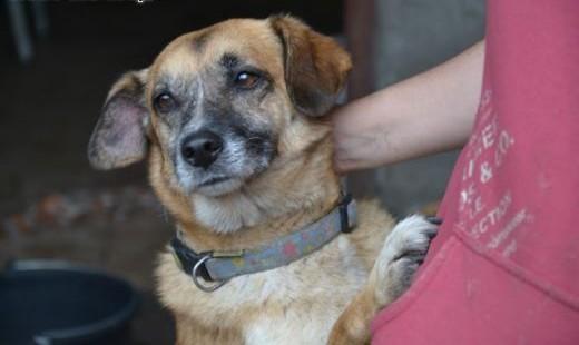 Kora-niedowidząca psina przytulaśna bardzo karna  usłuchana i wierna   łódzkie Łódź
