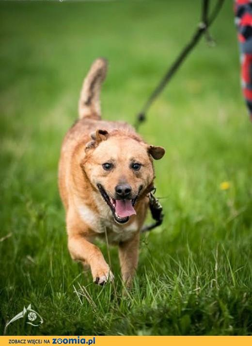 MARIO - fantastyczny pies co za pan brat z Człowiekiem jest  :),  lubelskie Lublin