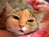 Majeczka - osierocona koteczka szuka kochającego domu