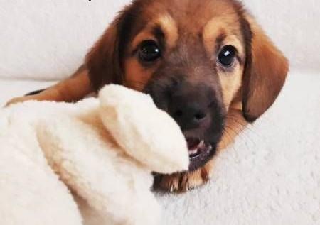 SUZI - mała  cudowna szczeniaczka szuka domu!   mazowieckie Warszawa