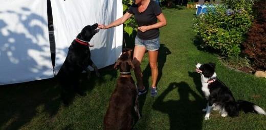 Szkolenie psów  pomoc behawioralna   opolskie Nysa