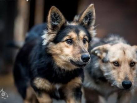 Gucio i Chałka - super pieski do adopcji!   mazowieckie Warszawa