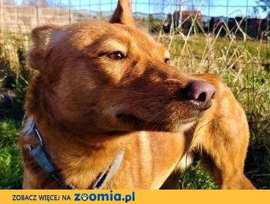 MIKUŚ - 3 letni, delikatny i wrażliwy psiak szuka domu